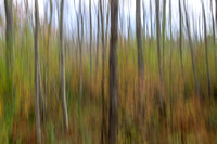 Autumn Woods Abstract #4