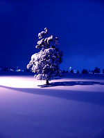 Solo Pine Tree in Snow