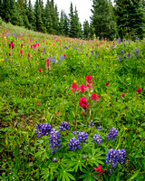 Shrine Pass Meadow