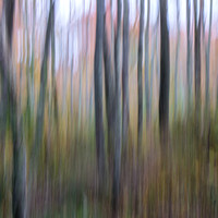 Autumn Woods Abstract #1