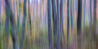 Autumn Woods Abstract #5