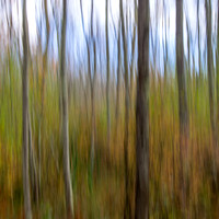 Autumn Woods Abstract #2